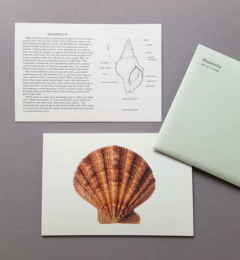 seashells card set